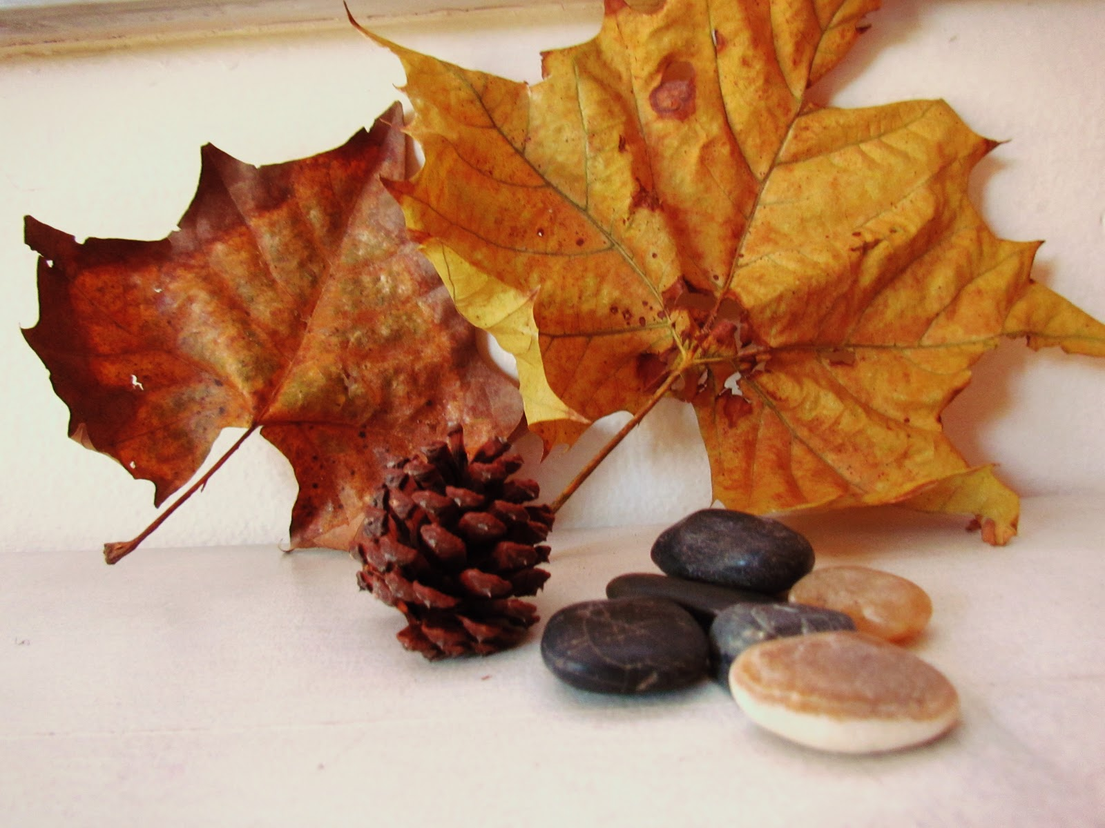 A rustic brown fall leaf and flat lay display tabletop still ife photography and seasonal living
