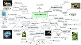 Kingdom Animalia : Defination, Classification, Phylum, Order