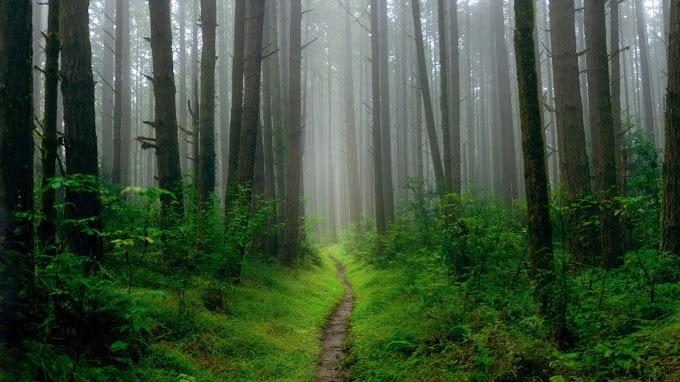 Paisagem Nevoeiro na Floresta