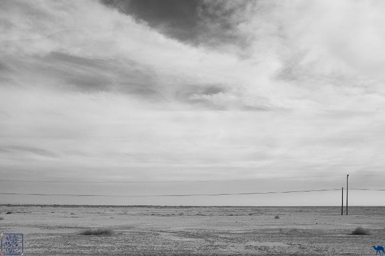 Le Chameau Bleu - Desert de la Californie du Sud- Etats Unis d'Amérique
