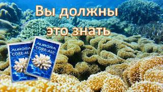 Как правильно принимать коралловую воду