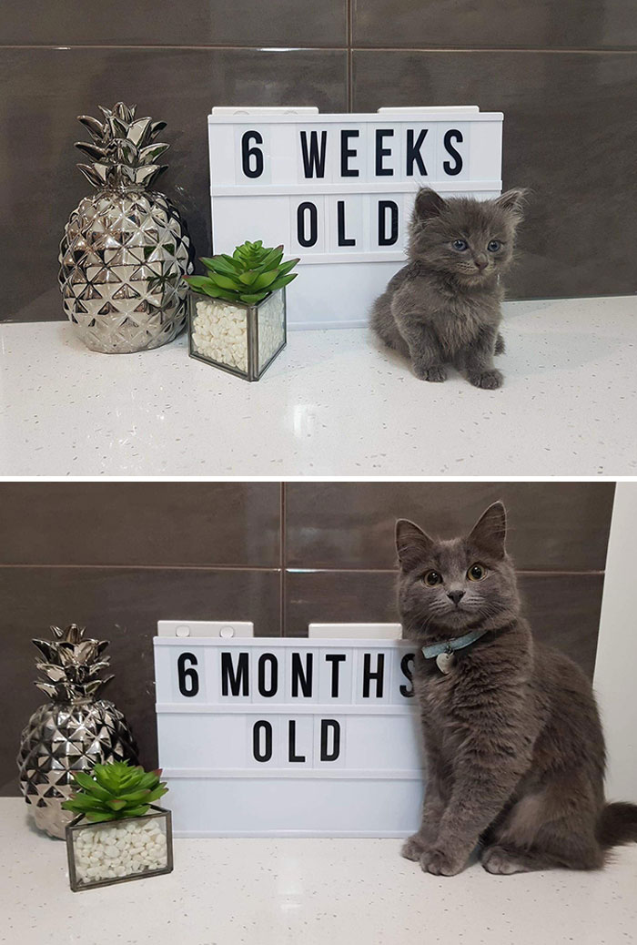 Amazing Transformations From Kitten To Cat