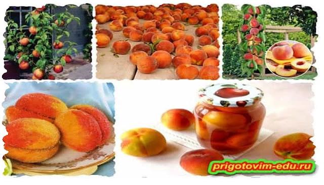 Как вырастить персики на своём огороде