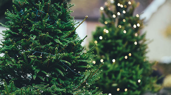Christmas tree led lights to prevent fast drying