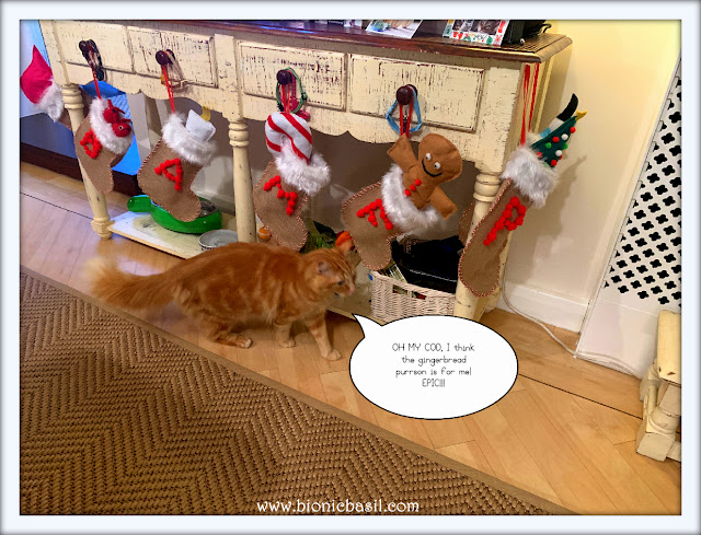 Fudge Sees His Pressie ©BionicBasil® Sunday Selfies