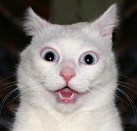 (photo of surprised cat)