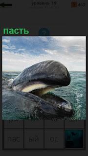 на поверхности воды пасть млекопитающего