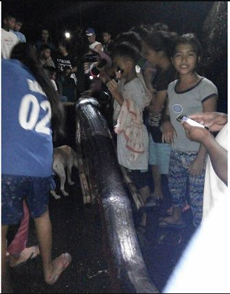 A Giant Oarfish Was Found in Southern Leyte After the Earthquake Last Night! Is This A Sign of The Upcoming 'Big One'?