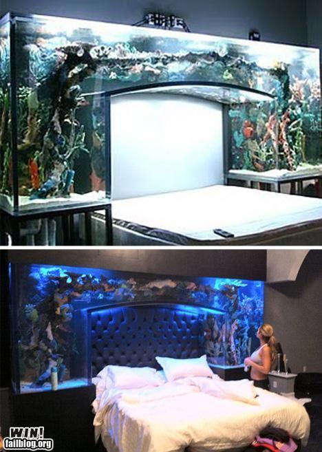 Bể cá cảnh đặt trong phòng ngủ ở nước ngoài không hiếm