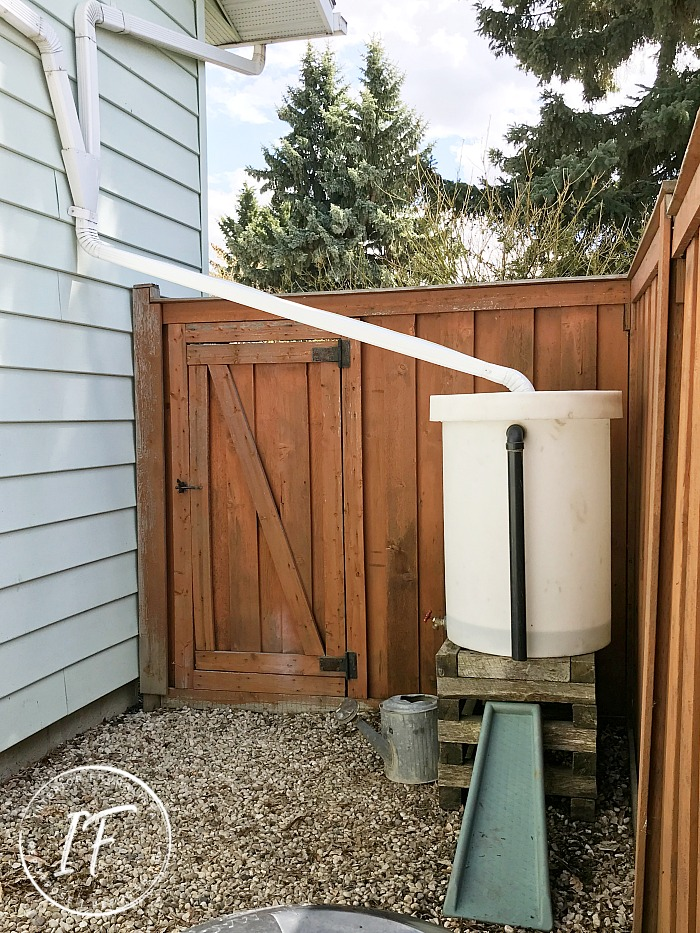 How to recycle a 50-gallon plastic container into an eco-friendly rain water barrel collection system plus how to compost in a small urban backyard.