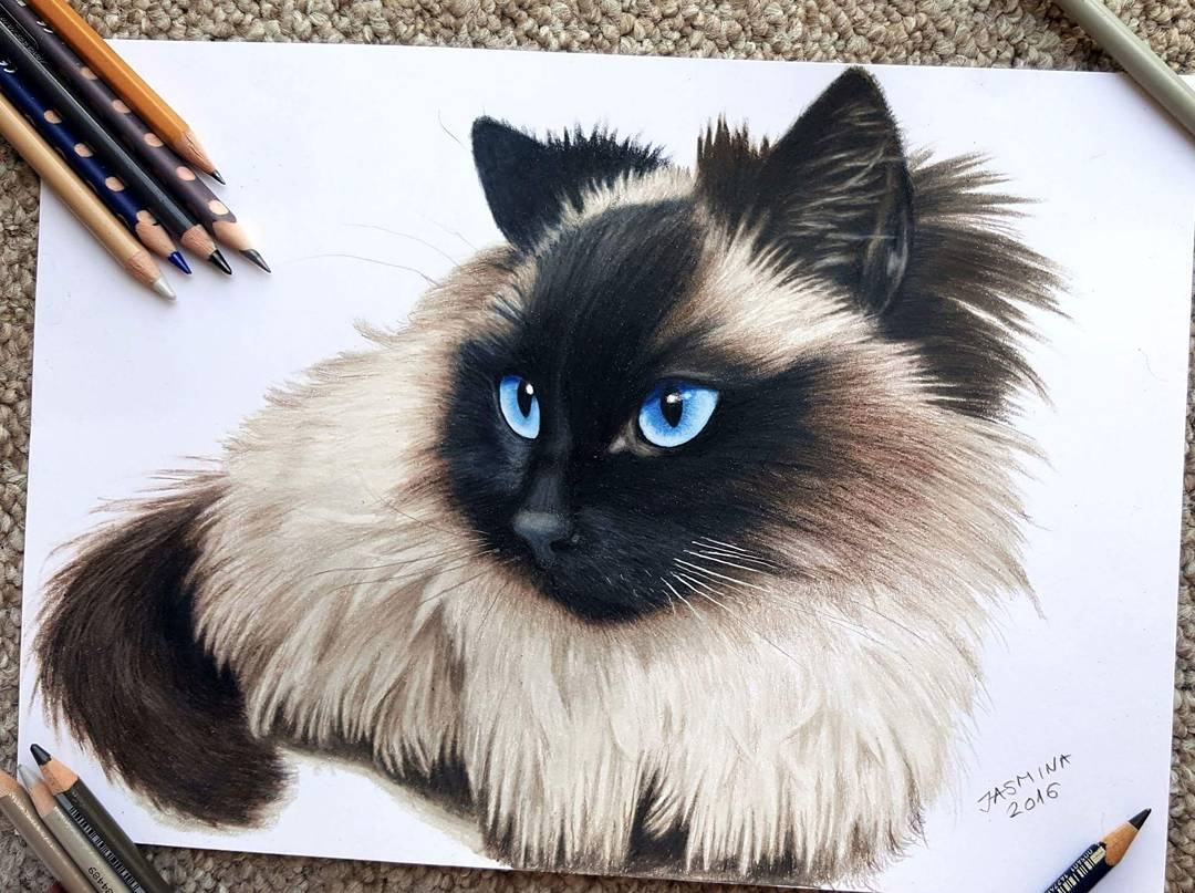 08-Siamese-Cat-Jasmina-Susak-Realistic-Animal-Drawings-with-Colored-Pencils-www-designstack-co