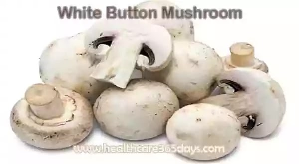 mushrooms-is good-for-boosting-your-immune-system
