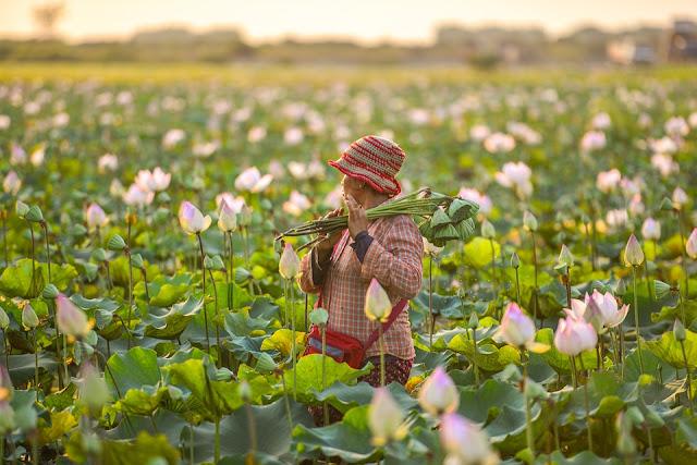 Bisnis Sampingan Paling Cocok Untuk Petani Dengan Modal Kecil Tapi Menjanjikan