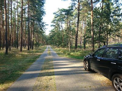 Waldweg zwischen Ferchesar und Lochow