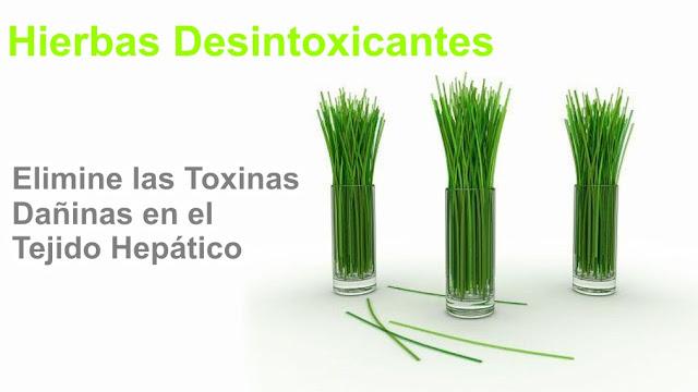 Hierbas Desintoxicantes para eliminar las dañinas toxinas en el tejido hepático