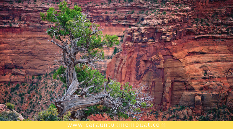 Juniper Tree on Canyonlands 3