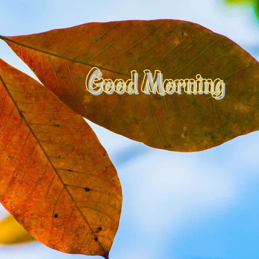 good morning to husband