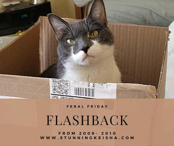Flashback Feral Friday: Boxed Up