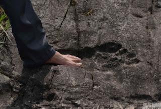 huella fosilizada de un pie gigante