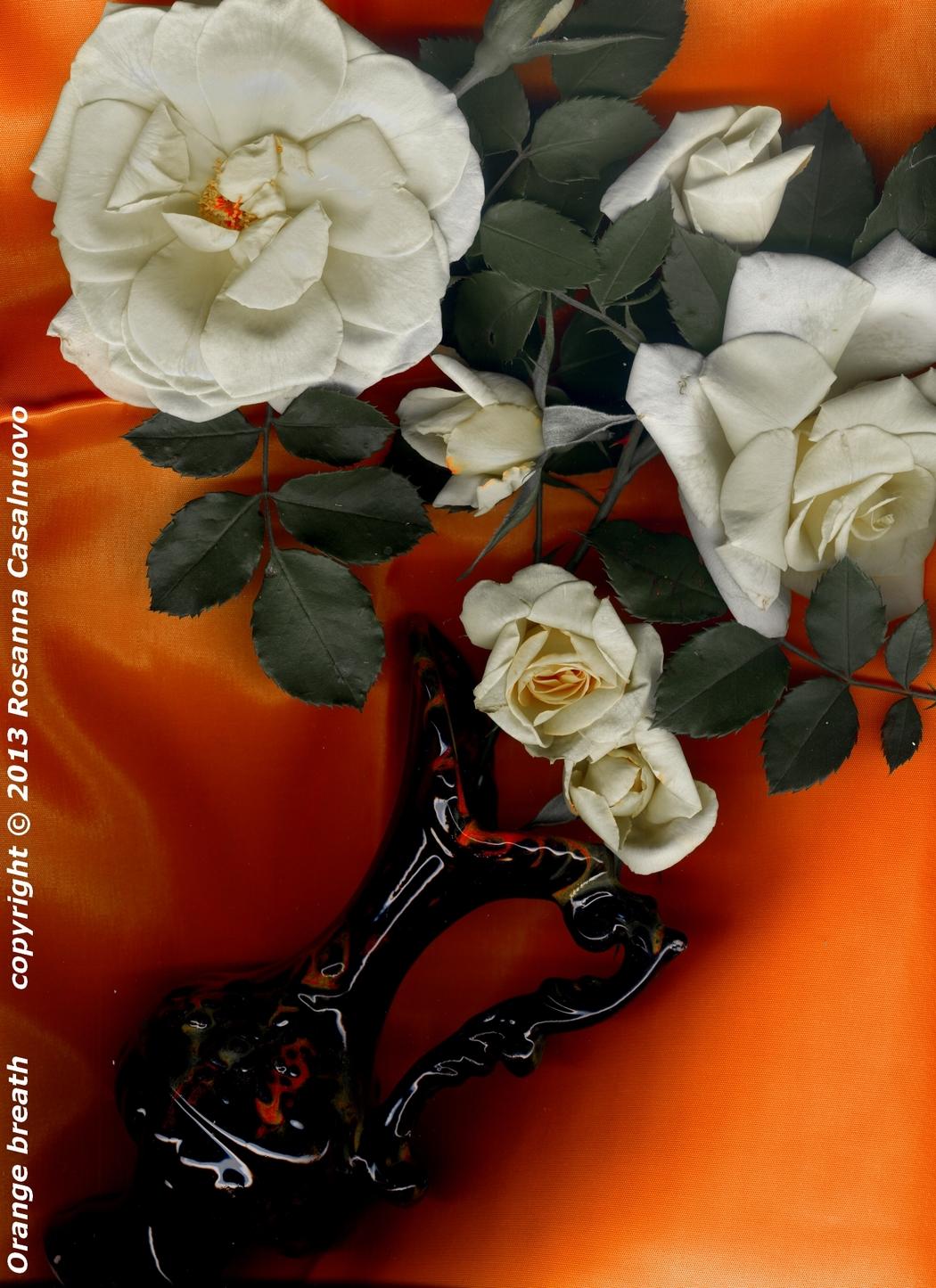scannografia rose in vaso manipolazione colori