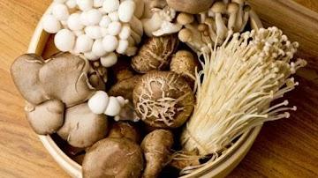 Estudo revela: Cogumelos protegem contra o declínio cognitivo