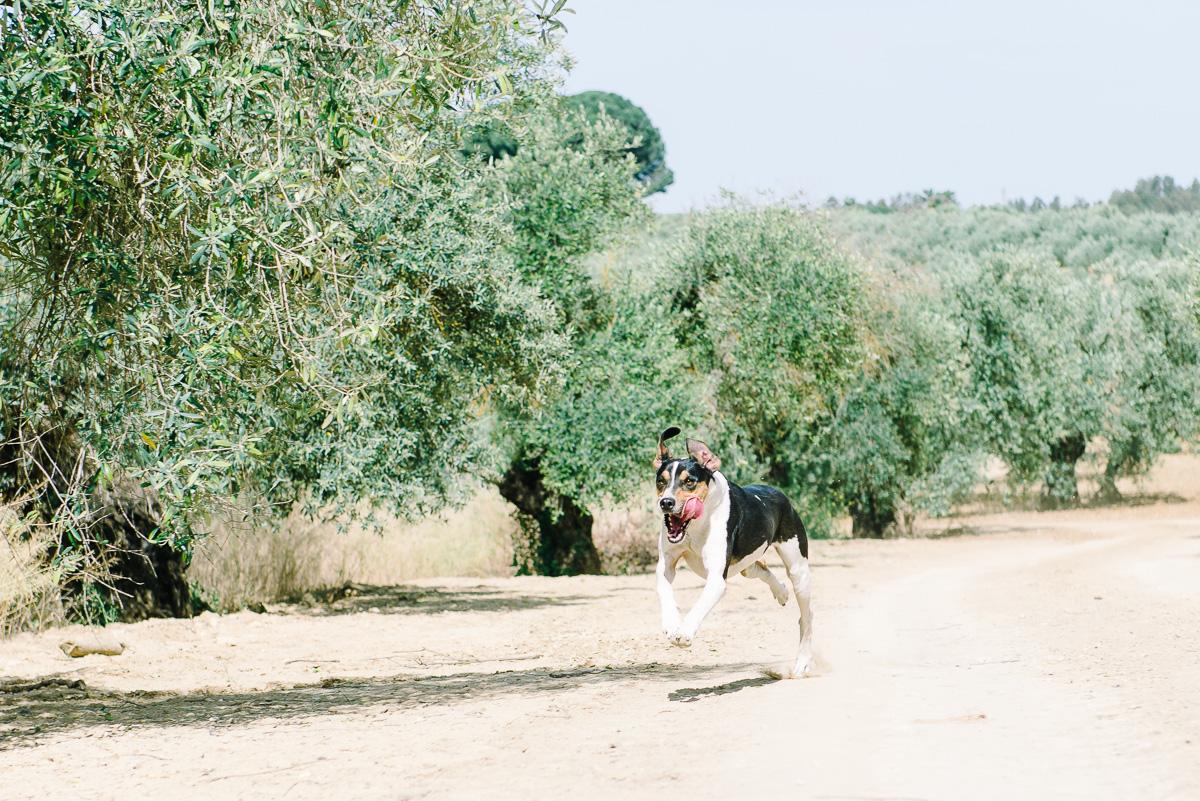 Como fotografiar a un perro corriendo