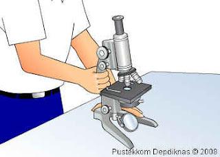 Mikroskop: Bagian & Fungsi, Jenis, Gambar, Prinsip Kerja ...
