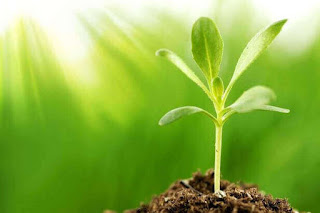 3 Hormon yang Mempengaruhi Pertumbuhan Tanaman