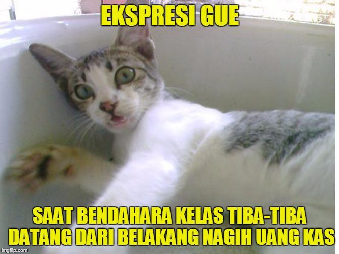 13 Meme Kucing Ini Lucu Banget Bikin Gemes Campur Ngakak