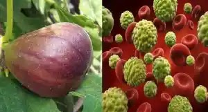 13 Ingredients That Are Able To Treat And Prevent Cancer Development And Growth