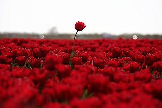 Nah Itulah N Gambar Bunga Yang Dapat Kami Sampaikan Untuk Kamu Bagaimana Gallery Di Atas Menarik Cantik Dan Indah Ya
