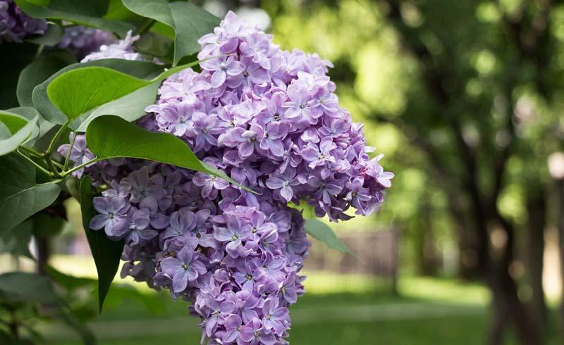 Flowers, Spring gardening
