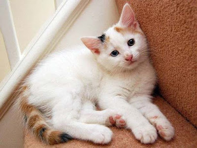 cute-cats-for-temple-photos-walls-images