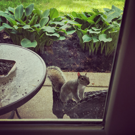 image of a grey squirrel perched on the chair, beside the table covered in scattered seeds, pictured through our window