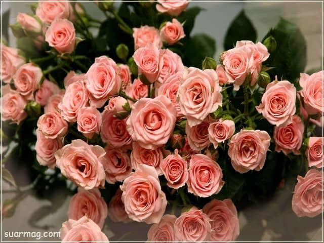 صور خلفيات - خلفيات ورد 8   Wallpapers - Flowers backgrounds 8