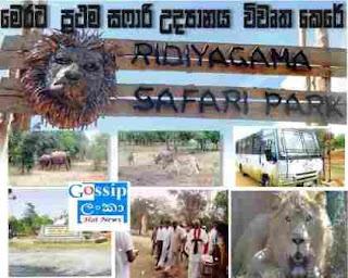 Safari Park Ridiyagama gossip lanka hot news