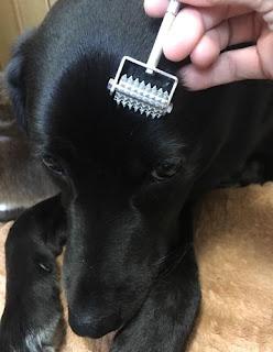 tratamentos veterinários em cães