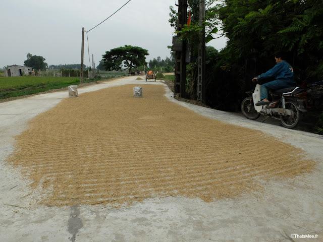 reserve van long ninh binh vietnam campagne riz qui seche par terre