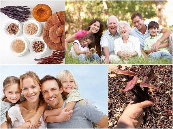 Nấm lim xanh tự nhiên-món quà  sức khỏe