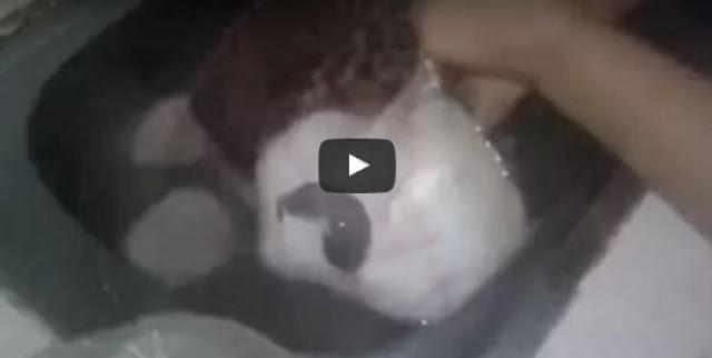 فيديو شاهد ماذا وجدت هذه المرأة في داخل سمكة 'الراي'؟ ستتفاجأ من ما شاهدته الإمرأة!