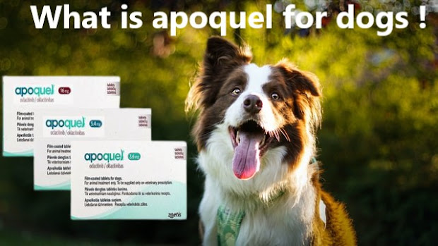 apoquel for dogs side effects apoquel for dogs dosage apoquel for dogs price apoquel for dogs 16mg apoquel for dogs reviews apoquel for dogs dosage chart apoquel for dogs uses apoquel for dogs 5.4mg apoquel for dogs alternative apoquel for dogs actress apoquel for dogs allergies apoquel for dogs amazon apoquel for dogs age apoquel for dogs at walmart apoquel for dogs at costco