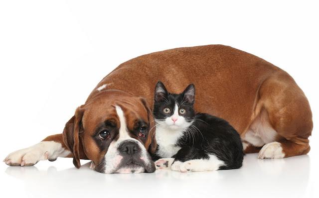Flea And Tick Medicine For Dogs