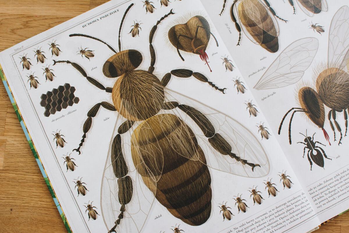 książka o owadach dla dzieci