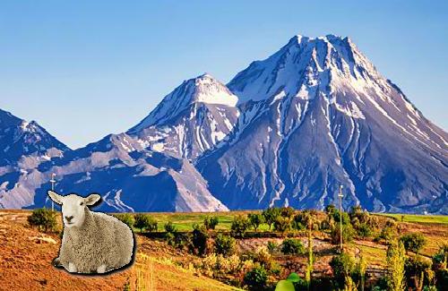 WowEscape Mountain Sheep …