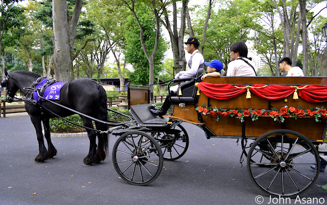 Horse Carriage Ride in Rose Garden