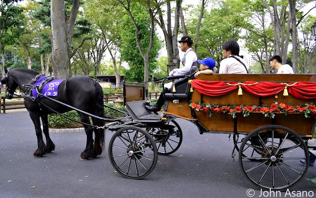 Horse Carriage Ride in Rose Garden