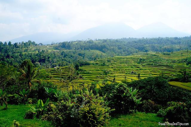 Rizières de Jati Luwig à Bali en Indonésie