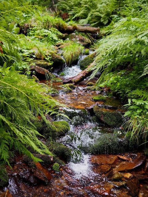 Národní park, příroda, voda, oblázky, Krkonoše