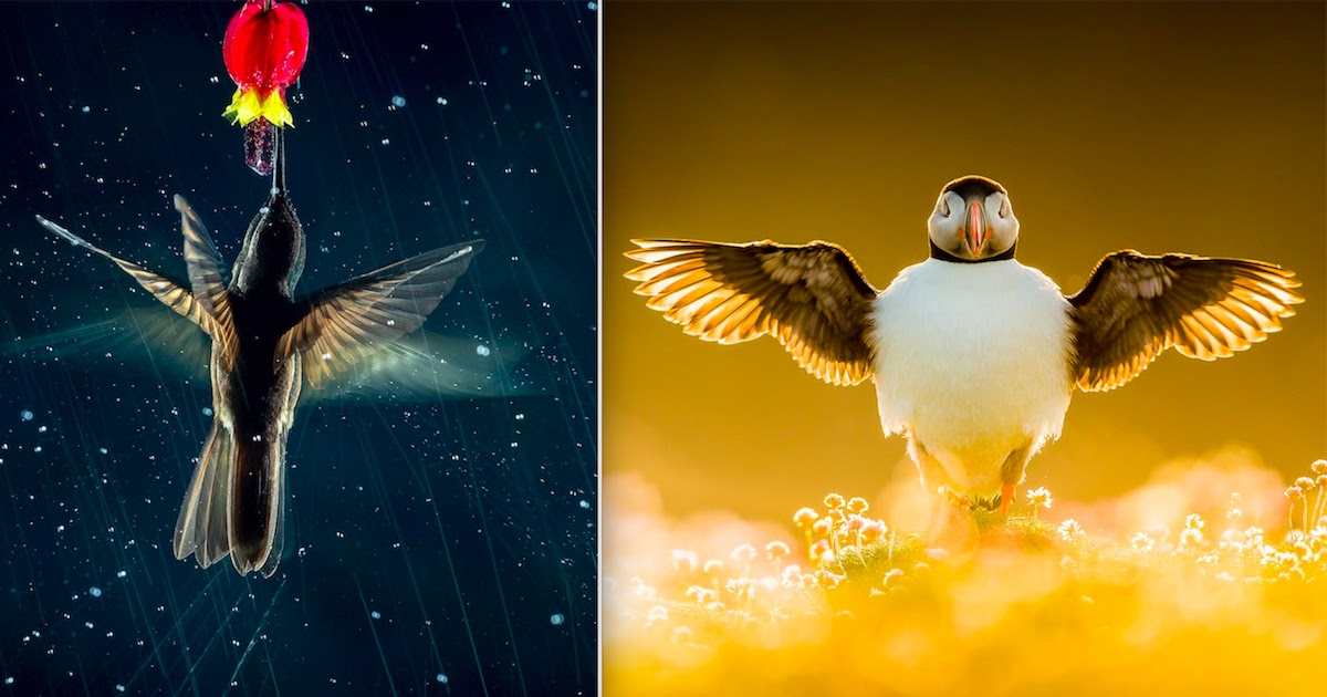 Breath-Taking Winning Photos From The 2021 Bird Photographer Of The Year Contest