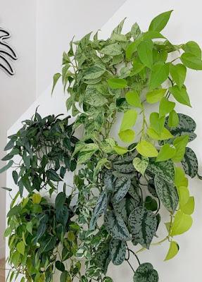 Jual tanaman hias di sentul - Alby flora